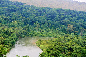 Mpassa river and Bateke Plateau National Park, aerial view. Site for reintroduction of two female Western lowland gorilla (Gorilla gorilla gorilla) from Beauval zoo through Gorilla Protection Project....  -  Eric Baccega