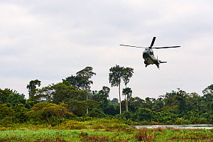 Helicopter transporting Western lowland gorilla (Gorilla gorilla gorilla) female to habituation island prior to reintroduction by Gorilla Protection Project. Gorilla from Beauval zoo, France. Bateke P...  -  Eric Baccega