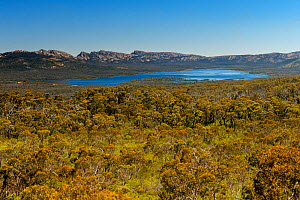 Woodland leading down to Moora Moora Reservoir, sandstone mountain ranges in background. Grampians National Park, Victoria, Australia. December 2016. - Steven David Miller