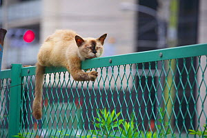 Stray cat resting on fence, Japan. - Aflo