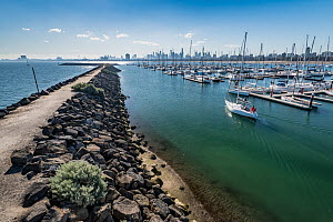 St Kilda breakwater, location of Little penguin (Eudyptula minor) colony. Royal Melbourne Yacht Squadron marina with city skyline beyond. Melbourne, Victoria, Australia. 2018.  -  Doug Gimesy