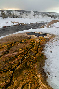 South Scalloped Spring with thermophilic algae, on the bank of the Firehole River, Upper Geyser Basin, Yellowstone National Park, Wyoming, USA. January. - John Shaw