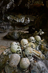 Skulls inside cave of Toraja cemetery. The Toraja culture of West and South Sulawesi revolves around death with funeral ceremonies an important part of daily life. Indonesia. 2015. - Enrique Lopez-Tapia