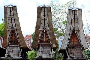 Traditional houses in Tana Toraja village, South Sulawesi, Indonesia. 2015.  -  Enrique Lopez-Tapia