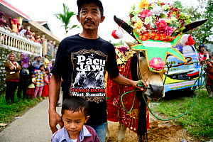 Man and boy holding Oxen in costume with flower headdress in parade. During Pacu Jawi religious event, Southern Sumatra, Indonesia. 2015.  -  Enrique Lopez-Tapia
