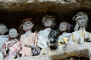 Tau tau, effigies of the dead carved in wood at Tana Toraja cemetery. Toraja is an ethnic group in West and South Sulawesi. The culture revolves around death with funeral ceremonies an important part... - Enrique Lopez-Tapia