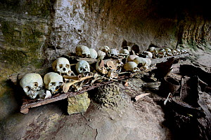 Skulls and bones in cave, Toraja cemetery. The Toraja culture of West and South Sulawesi revolves around death with funeral ceremonies an important part of daily life. Indonesia. 2015. - Enrique Lopez-Tapia
