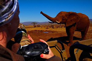 Photographer Victoria Peckett photographing a curious African bush elephant, (Loxodonta africana), Zimanga Private Nature Reserve, KwaZulu Natal, South Africa - Staffan Widstrand
