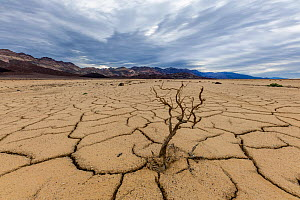 Cracked mud patterns across the valley floor. This mud came from a mudslide and boulders and vegetation were locked into place by the river of mud. Bandwater, Death Valley National Park, Mojave Desert...  -  Jack Dykinga