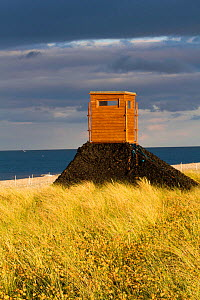 Bird hide, created by Birdwatch Ireland to study and monitor Little tern (Sterna albifrons) colony, indicator species of climate change. County Wicklow, Ireland, Scotland, UK, June. - David  Woodfall