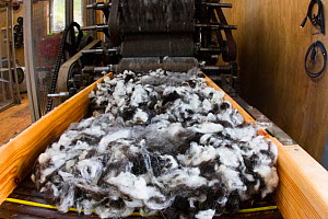 Sorting and grading wool for process of spinning for commercial use in woollen mill, North Uist, Outer Hebrides. Scotland, UK, July 2016.  -  David  Woodfall