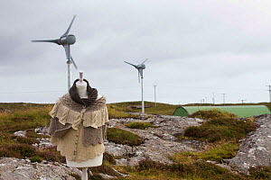 Manequin with knitwear made from sheep on machair with sustainable power wind turbines powering production of wool from machair grazing sheep. North Uist, Outer Hebrides. Scotland, UK, July 2016.  -  David  Woodfall