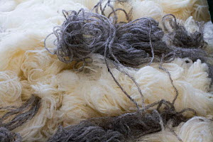 White and grey wool thread, locally produced, North Uist, Outer Hebrides. Scotland, UK, July 2016.  -  David  Woodfall