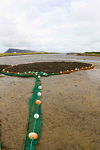 Sea weed collected in boom at low tide, used in pharmaceutical industry products. North Uist, Scotland, UK, July.  -  David  Woodfall