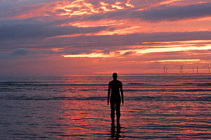Silhouettes of Sir Antony Gormley's sculptures 'Another Place' on Crosby beach, at sunset. Liverpool bay, Mersey Estuary, England, UK, October 2011.  -  David  Woodfall