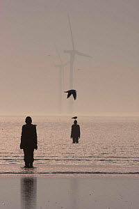 Silhouettes of Sir Antony Gormley's sculptures 'Another Place' on Crosby beach, with wind turbines in Liverpool bay. Mersey Estuary, England, UK, October 2011. - David  Woodfall