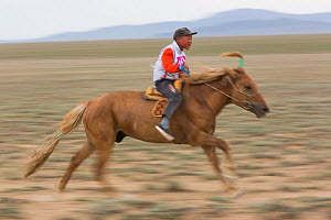 Boy racing young horse during Naadam festival. Great Gobi B Strictly Protected Area, Mongolia. August 2018.  -  Cyril Ruoso