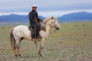 Shepherd riding horse to look for cattle. Cattle compete for food with reintroduced Przewalski horse (Equus ferus przewalskii). Great Gobi B Strictly Protected Area, Mongolia. August 2018.  -  Cyril Ruoso