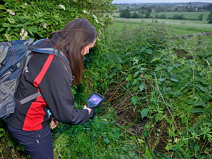 Lucy Bearman-Brown using a thermal imager to confirm there is a Hedgehog (Erinaceus europaeus) hidden in a nest where a sniffer dog has indicated it has found one, Hartpury University, Gloucestershire... - Nick Upton