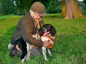 Louise Wilson of Conservation K9 Consultancy rewards sniffer dog Henry with a cuddle after he has indicated that he has found a Hedgehog (Erinaceus europaeus) hidden in a daytime nest in undergrowth,... - Nick Upton