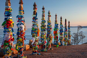 Traditional wooden prayer pillars with flags. Olkhon Island, Buryat Region, Lake Baikal, Siberia, Russia. February 2019. - Ingo Arndt
