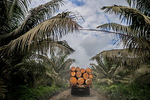 Palm oil crops and deforestation in the Ecuadorian Choco Esmeraldas, Ecuador - Lucas Bustamante