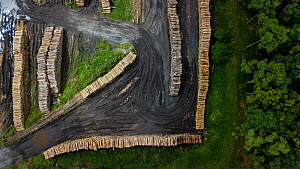 Aerial view of cut tree trunks in deforested Ecuadorian Choco, Esmeraldas, Ecuador. 25 tree species, many of them threatened, are involved.  -  Lucas Bustamante