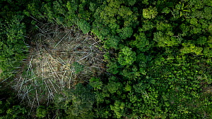 Deforestation in the Amazon Basin Yasuni National Park, Orellana, Ecuador - Lucas Bustamante