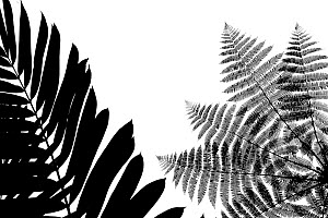 Silhouetted ferns in cloud-forest, Mashpi, Pichincha, Ecuador - Lucas Bustamante