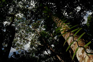 View into rainforest canopy. Tambopata National Reserve, Madre de Dios, Peru. - Lucas Bustamante