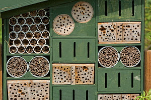 Insect / invertebrate house / bug hotel with various refuge options for hiding / over-wintering, WWT, West Sussex, UK, July. - Nigel Cattlin