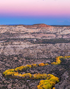 Deer Creek with autumn Cottonwood (Populus) trees following the river, in sandstone wilderness at dusk. Grand Staircas-Escalante National Monument, Utah, USA, October 2018. - Jack Dykinga