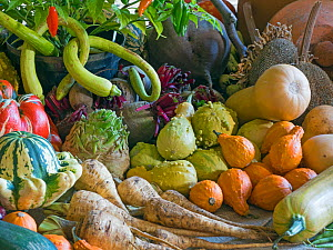 Home-grown fruit and vegetables harvested in the autumn. October.  -  Ernie  Janes