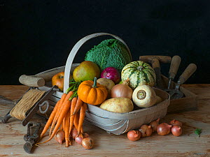 RF - Garden trug full of home-grown fruit and vegetables harvested in autumn. (This image may be licensed either as rights managed or royalty free.)  -  Ernie Janes
