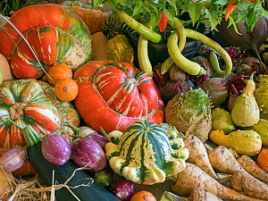 RF - Home-grown fruit and vegetables on display for a harvest festival. (This image may be licensed either as rights managed or royalty free.)  -  Ernie Janes