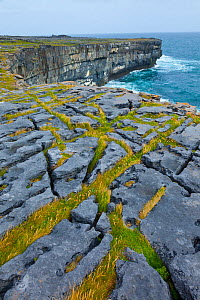 Limestone pavement overlooking Galway Bay. Dun Duchathair / Black Fort Cliffs. Inishmore, Aran Islands, County Galway, Ireland. May 2011.  -  Juan  Carlos Munoz