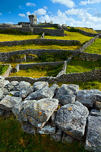 View across fields and drystone walls to O'Brien's Castle. Inisheer, Aran Islands, County Galway, Ireland. May 2011.  -  Juan  Carlos Munoz