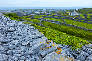 Dun Chonchuir Fort, Inishmaan, Aran Islands, County Galway, Ireland. May 2011.  -  Juan  Carlos Munoz