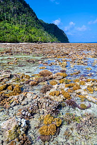 Hard coral reef exposed by a low spring tide in front of an island. Yillet Island, Misool, Raja Ampat, West Papua, Indonesia. Ceram Sea. Tropical West Pacific Ocean. - Alex Mustard