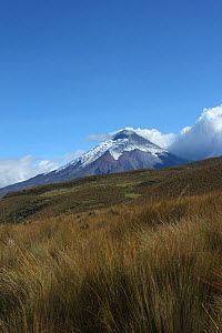 Paramo and Cotopaxi volcano following recent eruption, with ash on the glaciers. Cotopaxi National Park. Andes, Ecuador. - JIM CLARE