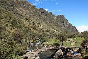 Bridge made from Polylepis wood, remote community of La Granja, in paramo. Azuay, Andes, Southern Ecuador.  -  JIM CLARE