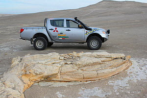 Fossilized whale, next to vehicle to show scale, in desert near Ica, Peru.  -  JIM CLARE