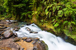 River with Ferns on bank. Lombadas Valley Nature Reserve, Sao Miguel Island, Azores, Portugal. - Juan Manuel Borrero