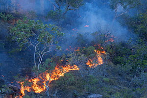 Controlled burning of vegetation. King George River, Koolama Bay, The Kimberley, Western Australia. 2016.  -  Rick Price