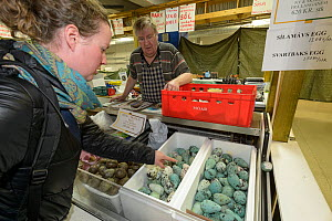 Common murre / guillemot (Uria aalge), Black-legged kittiwake (Rissa tridactyla) and Gull (Larus sp) eggs for sale at Reykjavik Weekend Market, Iceland. 2018.  -  Terry  Whittaker