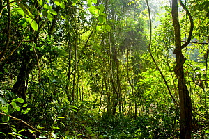 Shrubs, trees and lianas in tropical rainforest. Xishuangbanna,Yunnan Province, China. - Heather Angel