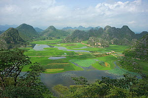 Wetland with areas of rice and Sacred lotus (Nelumbo nucifera) surrounded by peaks. View from Jade Dragon Peak. Puzhehei National Wetland Park, Yunnan Province, China, 2009.  -  Heather Angel