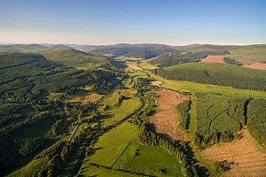Commercial forestry plantations in the Scottish Borders. Scottish Borders, Scotland, UK, June 2018.  -  SCOTLAND: The Big Picture