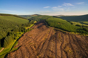 Commercial forestry plantations in the Scottish Borders, Scotland, UK, June 2018.  -  SCOTLAND: The Big Picture