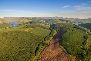 Aerial view of Commercial forestry plantations in the Scottish Borders, Scotland, UK, June.  -  SCOTLAND: The Big Picture